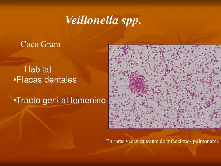 Veillonella spp.