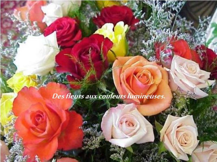 Des fleurs aux couleurs lumineuses.
