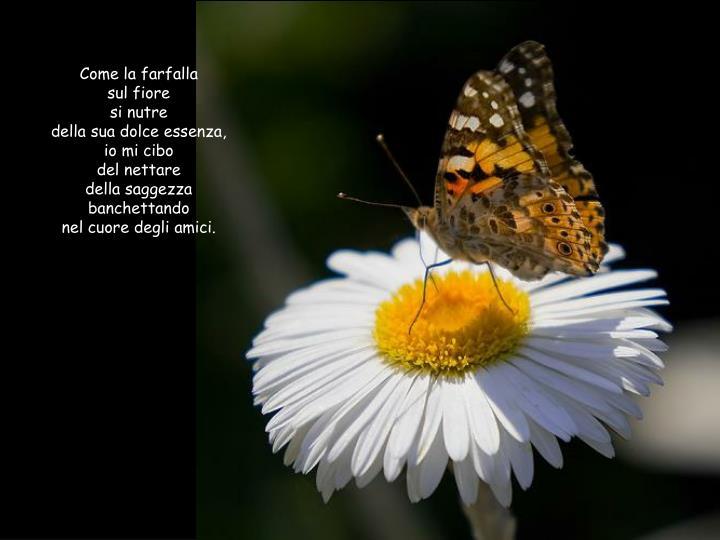 Come la farfalla