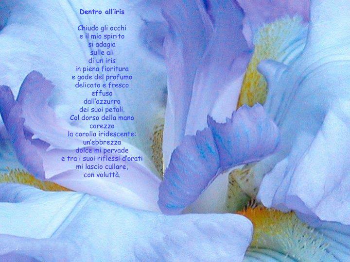 Dentro all'iris