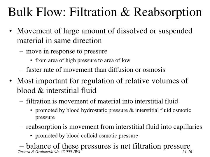 Bulk Flow: Filtration & Reabsorption
