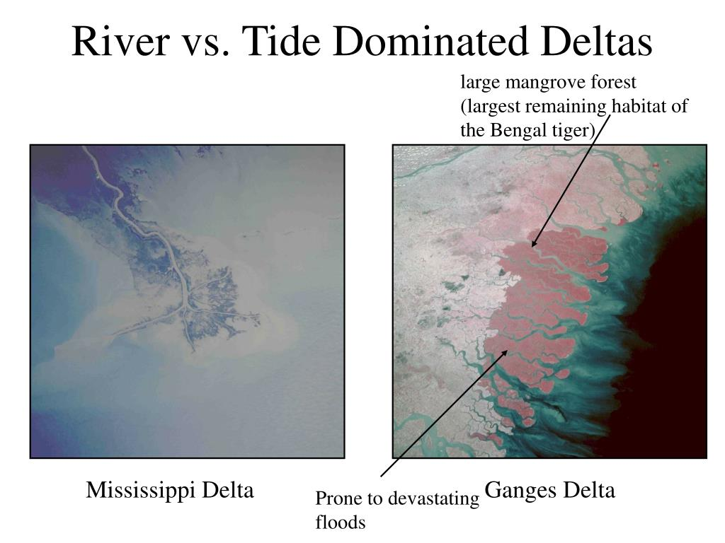 River vs. Tide Dominated Deltas
