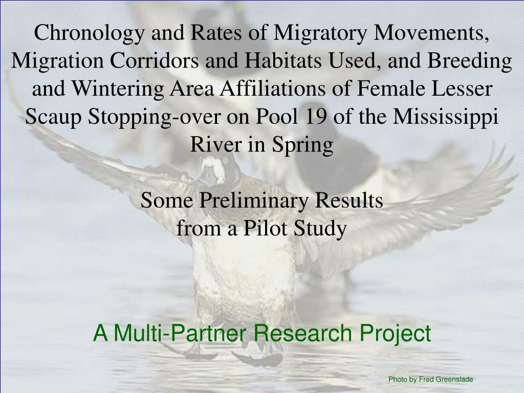 Chronology and Rates of Migratory Movements, Migration Corridors and Habitats Used, and Breeding and Wintering Area Affiliations of Female Lesser Scaup Stopping-over on Pool 19 of the Mississippi River in Spring