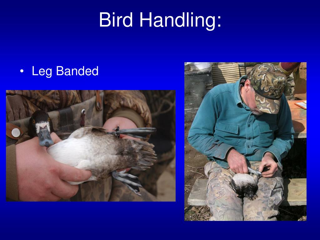 Bird Handling:
