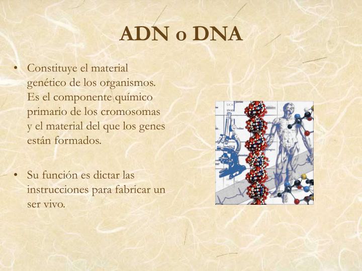 Constituye el material genético de los organismos. Es el componente químico primario de los cromosomas y el material del que los genes están formados.
