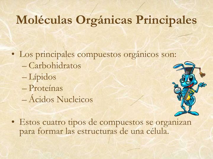 Moléculas Orgánicas Principales
