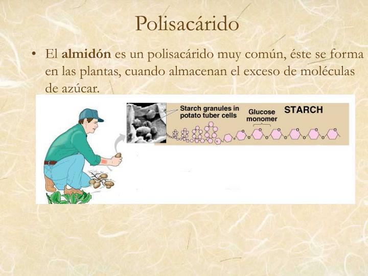 Polisacárido