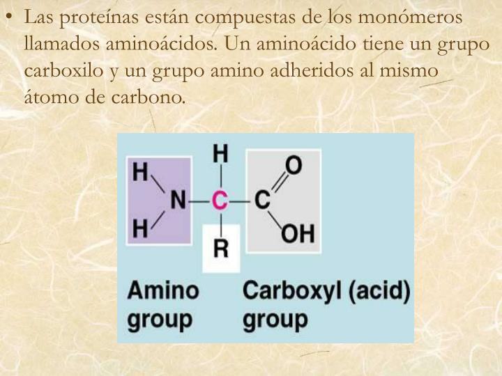 Las proteínas están compuestas de los monómeros llamados aminoácidos. Un aminoácido tiene un grupo carboxilo y un grupo amino adheridos al mismo átomo de carbono.