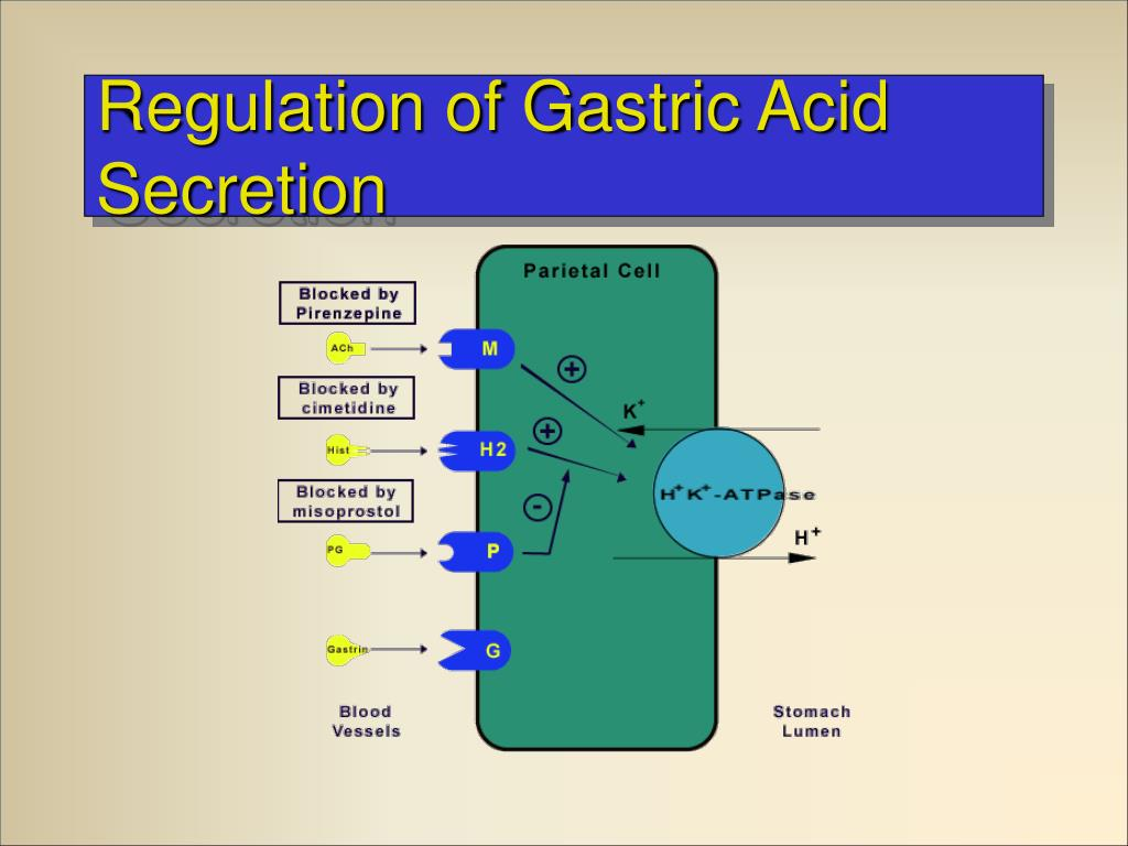 Regulation of Gastric Acid Secretion