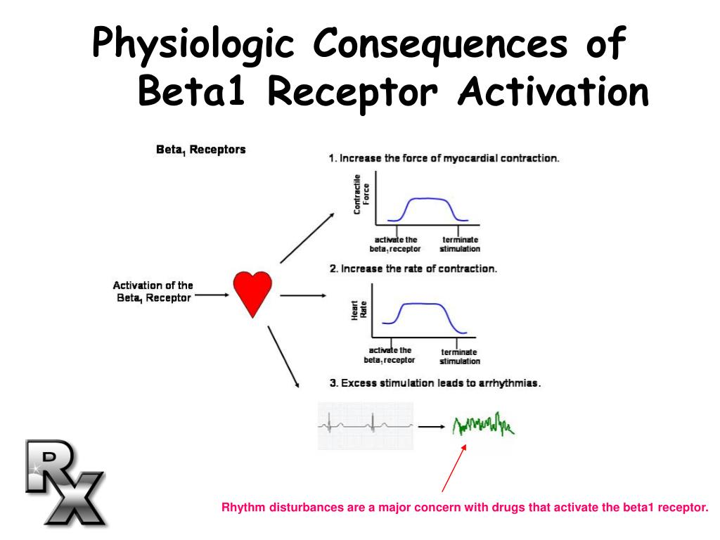Rhythm disturbances are a major concern with drugs that activate the beta1 receptor.