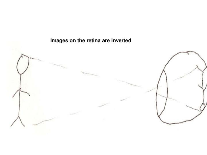 Images on the retina are inverted
