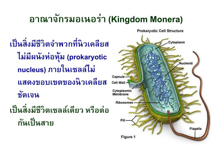 Kingdom monera1