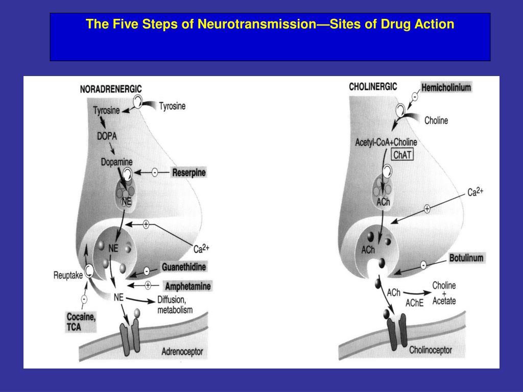 The Five Steps of Neurotransmission—Sites of Drug Action