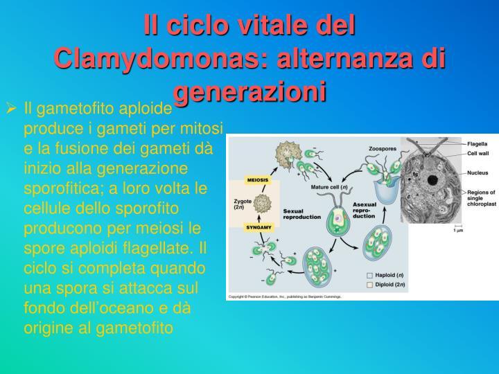 Ppt - Regno Dei Protisti Powerpoint Presentation