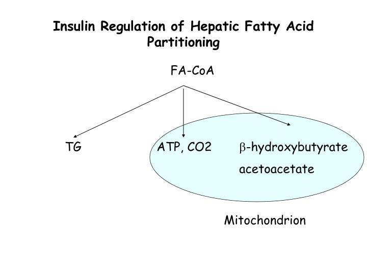 Insulin Regulation of Hepatic Fatty Acid Partitioning