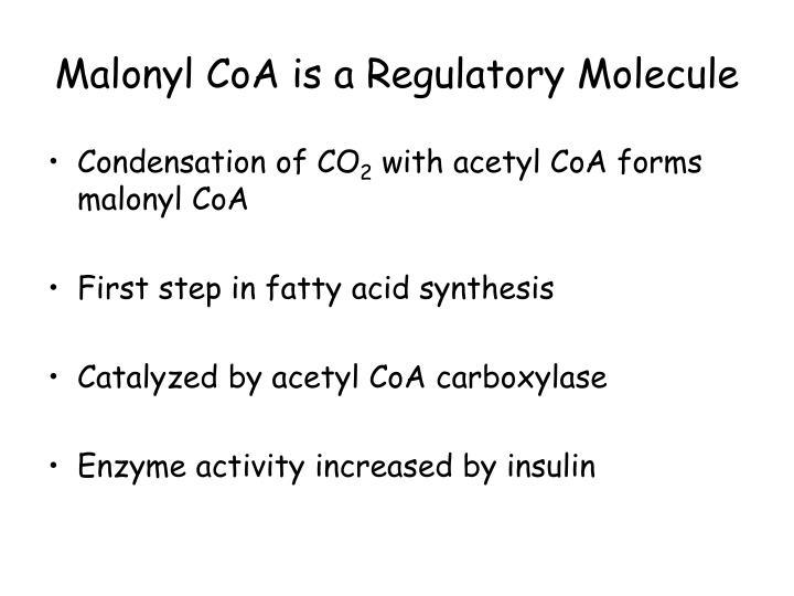 Malonyl CoA is a Regulatory Molecule