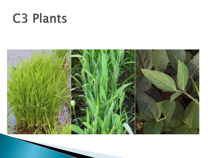 C3 Plants