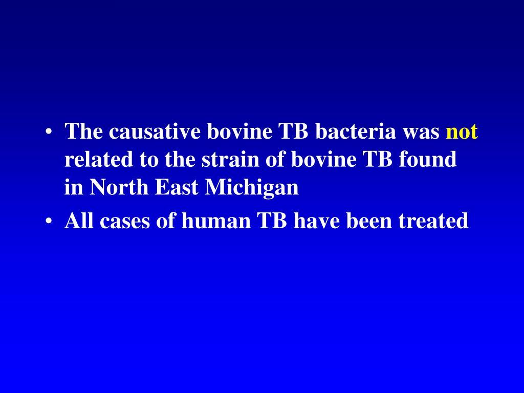The causative bovine TB bacteria was