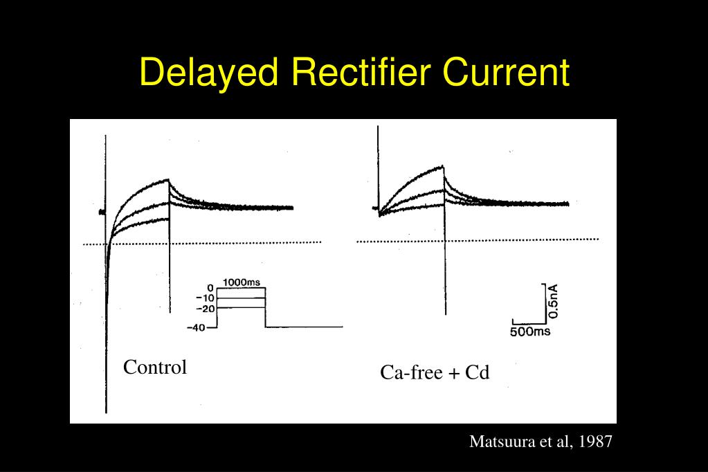 Delayed Rectifier Current