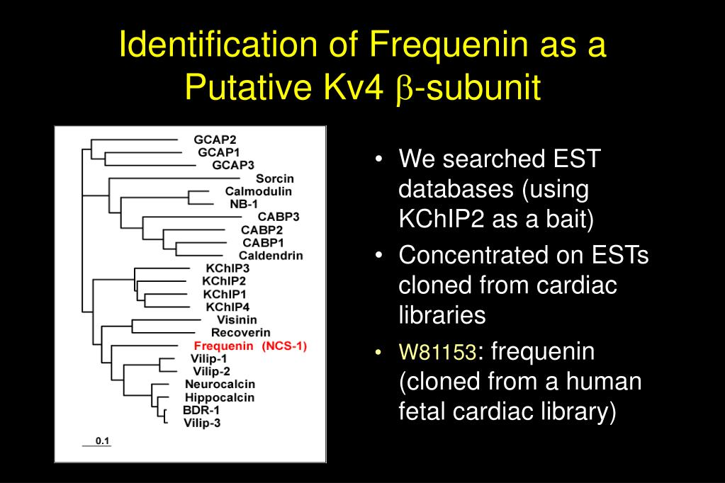 Identification of Frequenin as a Putative Kv4