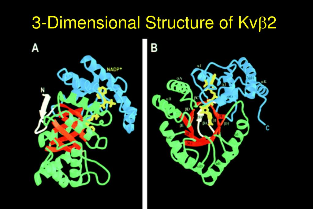 3-Dimensional Structure of Kv