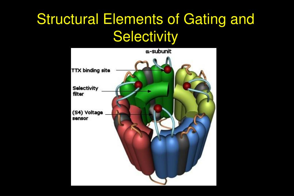 Structural Elements of Gating and Selectivity