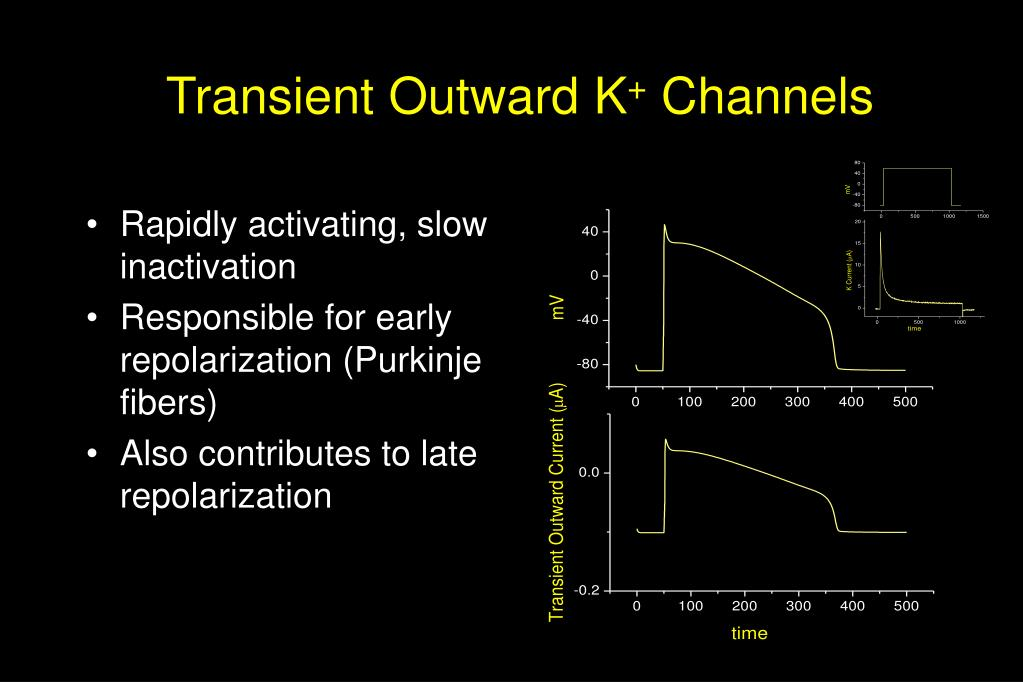Transient Outward K