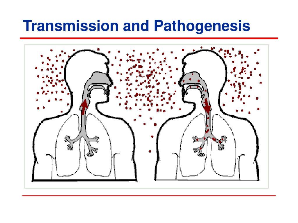 Transmission and Pathogenesis