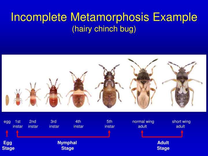 Incomplete Metamorphosis Example