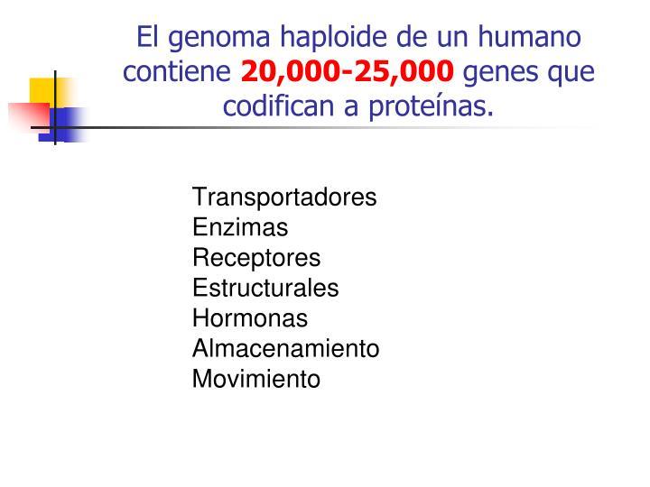 El genoma haploide de un humano contiene