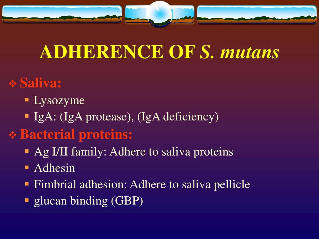 ADHERENCE OF