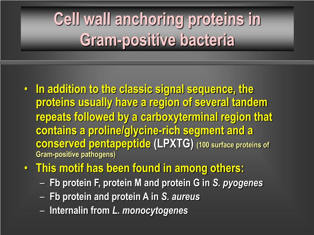 Cell wall anchoring proteins in