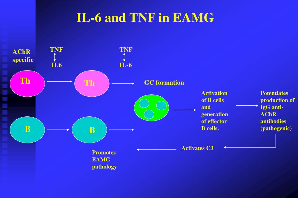 IL-6 and TNF in EAMG