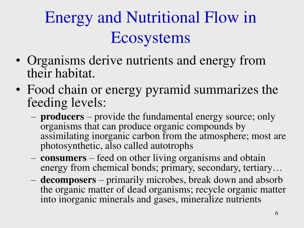 Energy and Nutritional Flow in Ecosystems