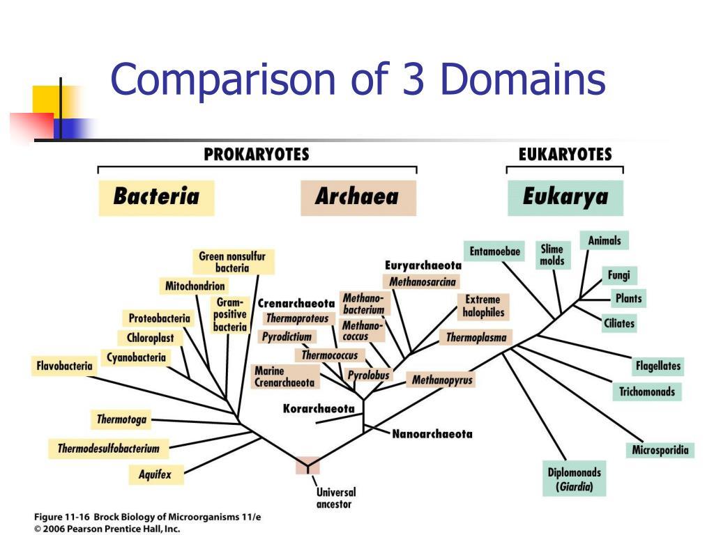 Comparison of 3 Domains
