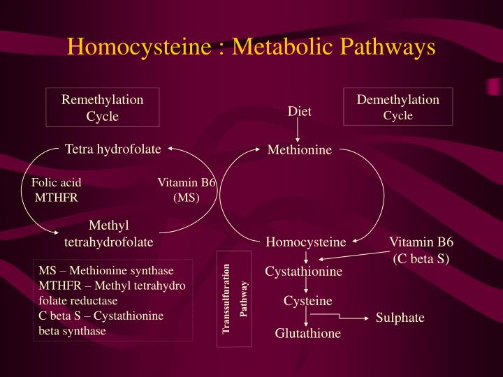 Homocysteine : Metabolic Pathways