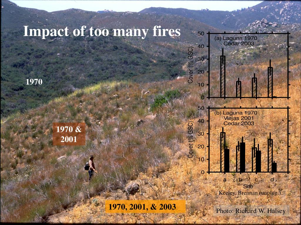 Impact of too many fires