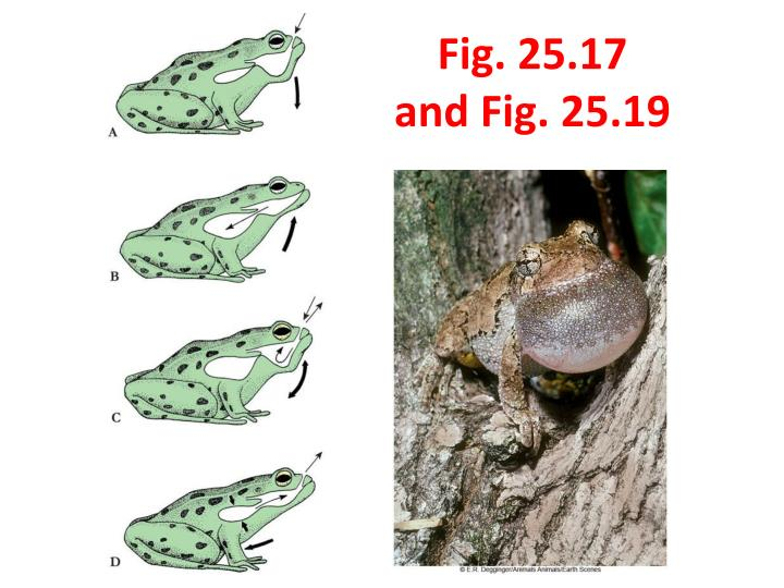 Fig. 25.17