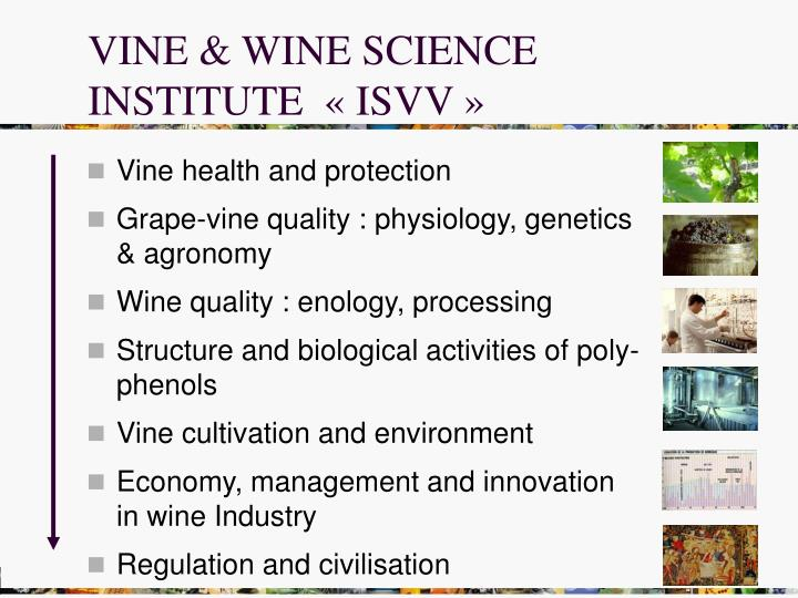VINE & WINE SCIENCE INSTITUTE  « ISVV »