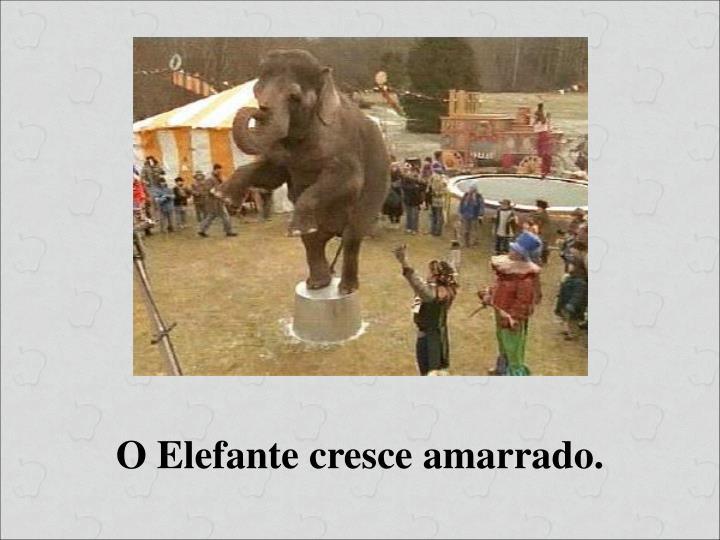 O Elefante cresce amarrado.