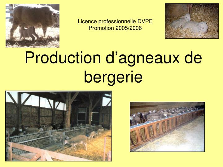 Production d agneaux de bergerie