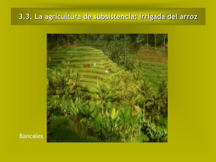 3.3. La agricultura de subsistencia: irrigada del arroz
