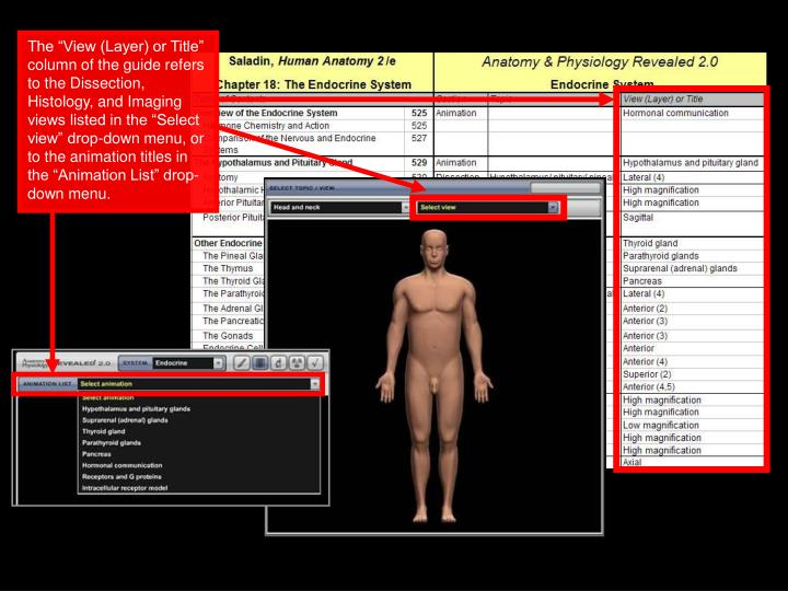 "The ""View (Layer) or Title"" column of the guide refers to the Dissection, Histology, and Imaging views listed in the ""Select view"" drop-down menu, or to the animation titles in the ""Animation List"" drop-down menu."