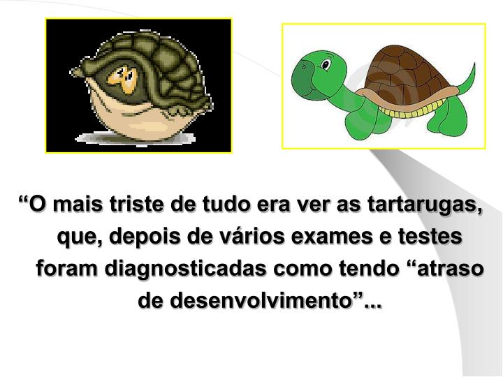 """""""O mais triste de tudo era ver as tartarugas, que, depois de vários exames e testes foram diagnosticadas como tendo """"atraso de desenvolvimento""""..."""