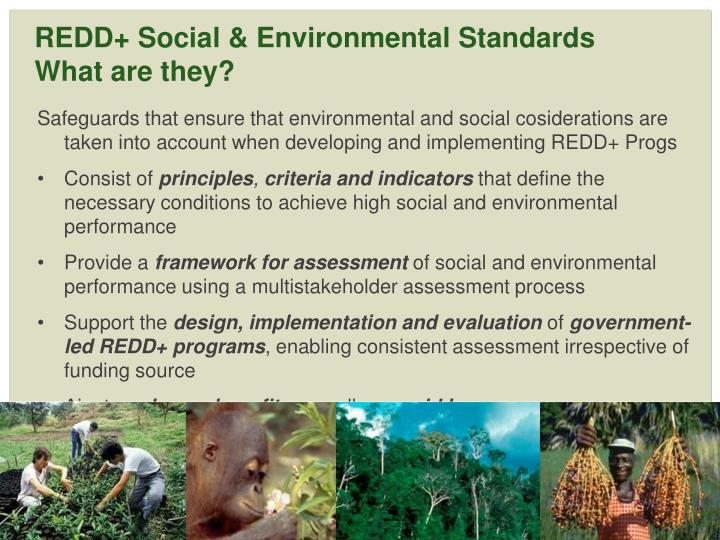 Redd social environmental standards what are they