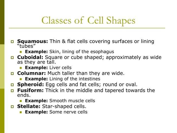 Classes of Cell Shapes