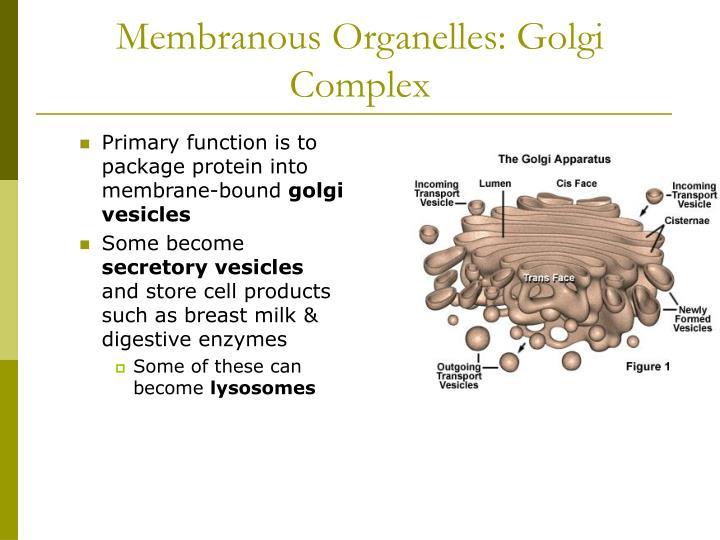 Membranous Organelles: Golgi Complex