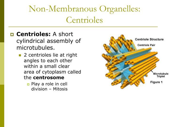 Non-Membranous Organelles: Centrioles