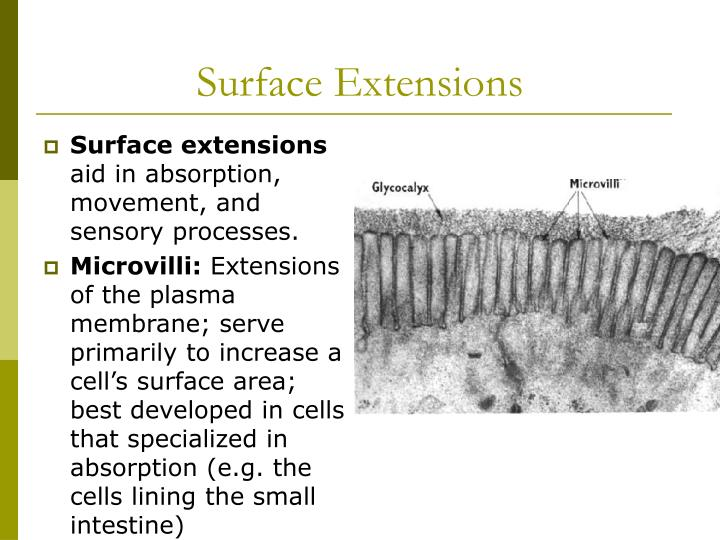 Surface Extensions