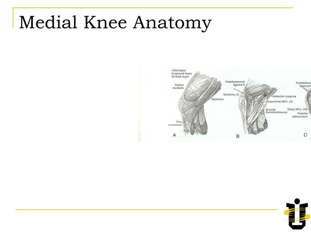 Medial Knee Anatomy